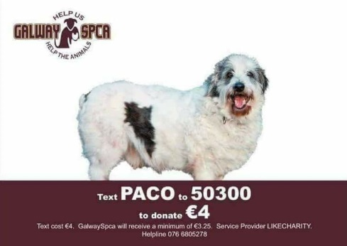 Text PACO to 50300 to donate €4
